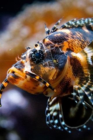 iPhone Wallpaper Fish underwater, aquarium