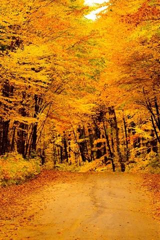 iPhone Papéis de Parede Outono dourado, estrada, árvores, folhas amarelas