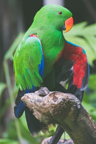 iPhone Wallpaper Green feathers parrot, birds photography