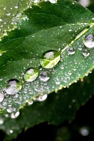 iPhone Wallpaper Green leaf, dew