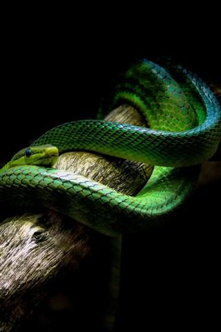 iPhone Wallpaper Green snake, black background