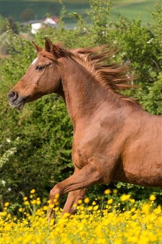 iPhone Wallpaper Horse running, brown mane, flowers