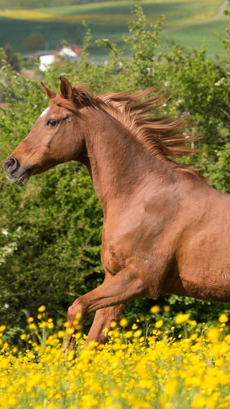 Horse Running Brown Mane Flowers 750x1334 Iphone 8 7 6 6s Wallpaper Background Picture Image