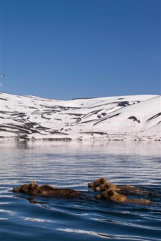 iPhone Wallpaper Kamchatka, mountains, snow, lake, bears swimming in water
