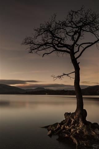 iPhone Wallpaper Lake, tree, evening