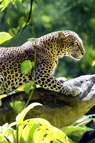 iPhone Wallpaper Leopard, predator, leaves