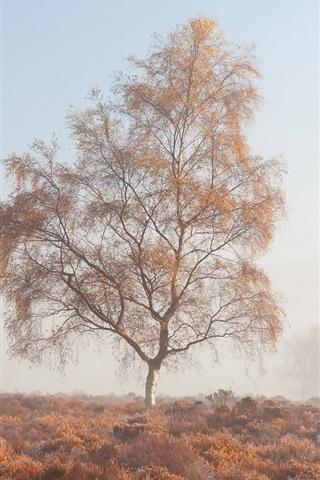 iPhone Wallpaper Morning, fog, trees, grass, autumn