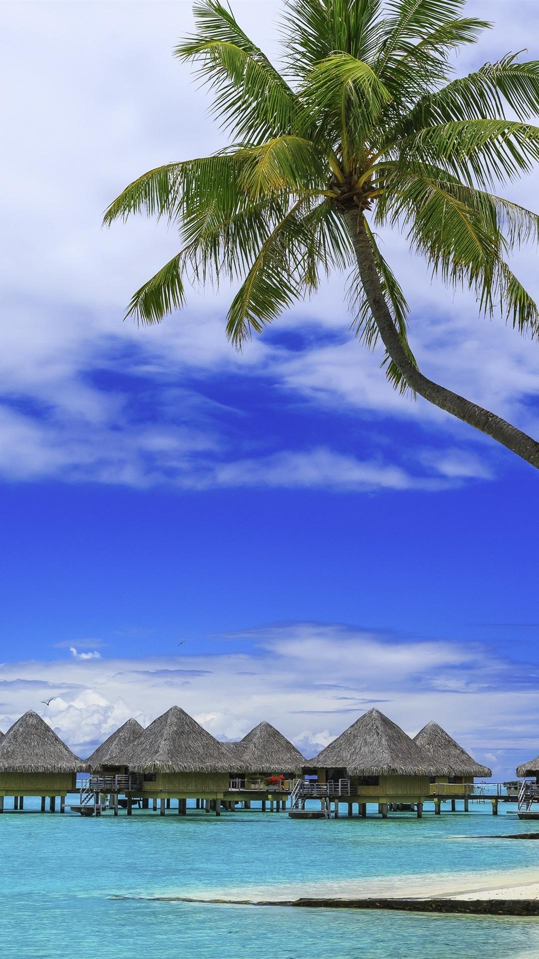 Palm Trees Tropical Summer Paradise Beach Sea Resort