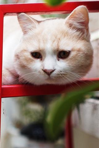 iPhone Wallpaper Playful cat