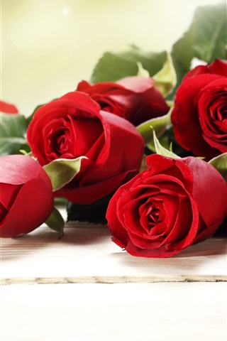 iPhone Wallpaper Red rose flowers, bouquet, romantic