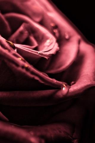 iPhoneの壁紙 赤いバラマクロ写真、露、黒の背景