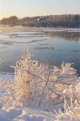 iPhone Wallpaper Snow, ice, river, grass, trees, winter, morning