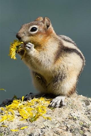 iPhone Wallpaper Squirrel eat flowers