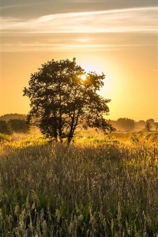 iPhone Wallpaper Summer field, trees, sunrise, morning