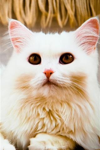iPhone Wallpaper White cat, look