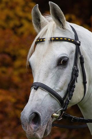 iPhone Wallpaper White horse, head, mane
