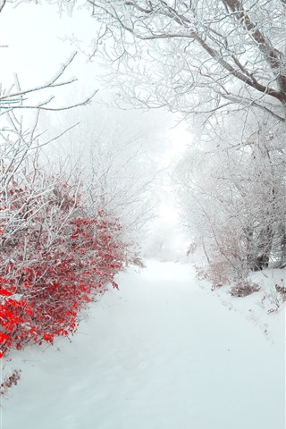 iPhone Wallpaper Winter, morning, snow, trees, red leaves, path