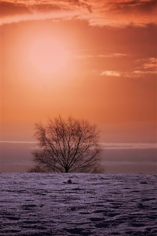 iPhone Wallpaper Winter sunset, field, tree, red sky