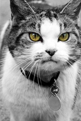 iPhone Papéis de Parede Olhos amarelos, gato, frente, vista
