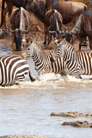 iPhone Wallpaper Africa wildlife, zebra, crocodile, herd, pond