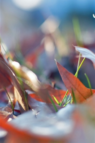 iPhone Wallpaper Autumn, red dry leaves, grass, ground