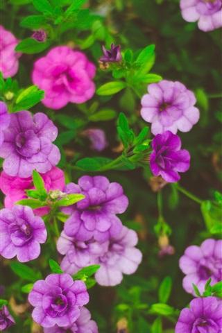 iPhone Wallpaper Beautiful flowers, pink, purple, yellow