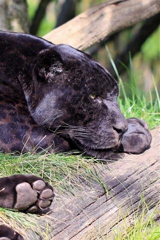 iPhone Wallpaper Black jaguar, panther, predator, rest
