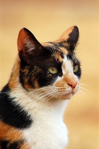 iPhone Wallpaper Cat close-up, three colors