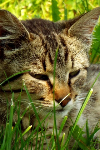 iPhone Wallpaper Cat lying on grass to rest