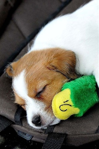 iPhone Wallpaper Cute puppy and toy sleep