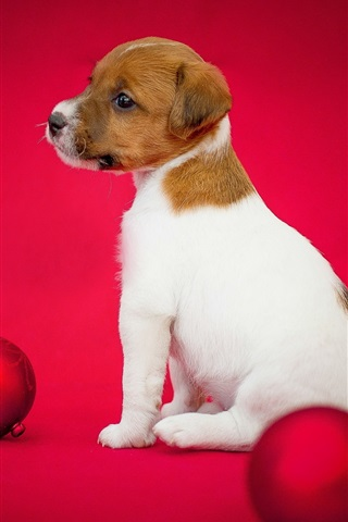 iPhone Wallpaper Dog and Christmas balls, puppy, red background