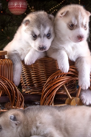 iPhone Wallpaper Five puppies, husky, toy wagon