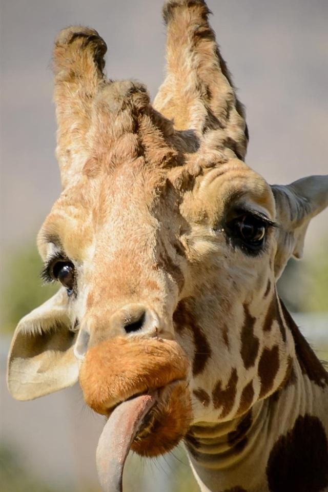 Надписью, прикольные жирафы картинки на русском