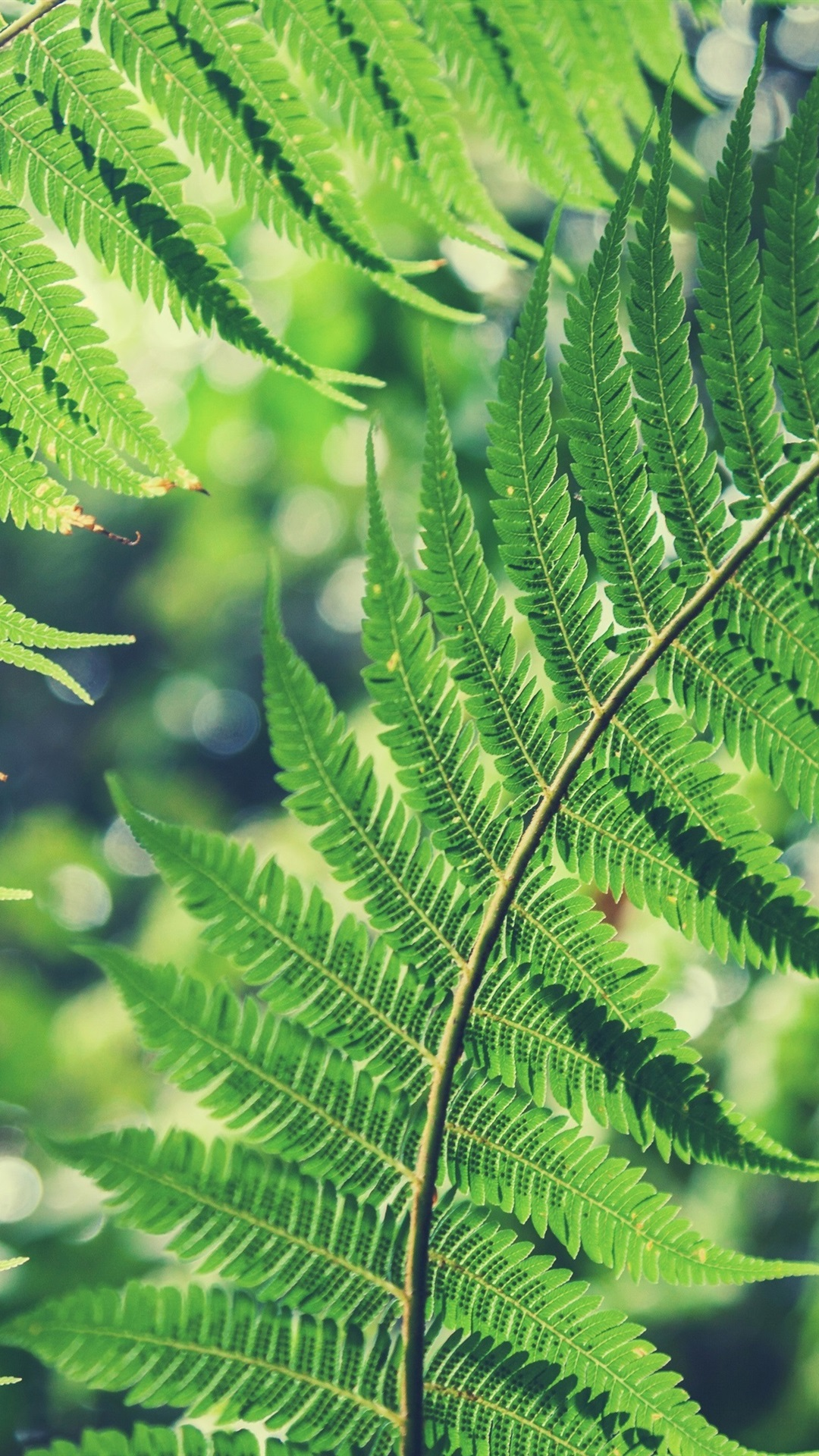Green Fern Leaves 1080x1920 Iphone 8 7 6 6s Plus Wallpaper