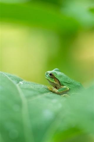 iPhone Wallpaper Green frog, green leaf, blurry
