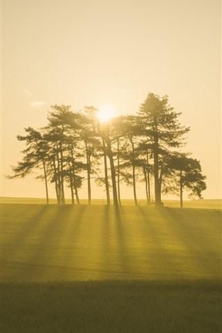 iPhone Wallpaper Morning, fog, trees, forest, field, sunrise