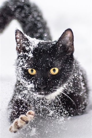 iPhone Wallpaper One black cat in the snow