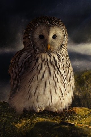 iPhone Wallpaper Owl, moss, stone, stream, dusk