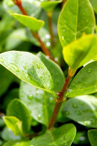 Plants After Rain Green Leaves Water Droplets Sunlight