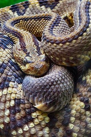 iPhone Wallpaper Rattlesnake close-up, snake, scales, tree