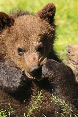 iPhone Wallpaper Two bears cubs playful, grass