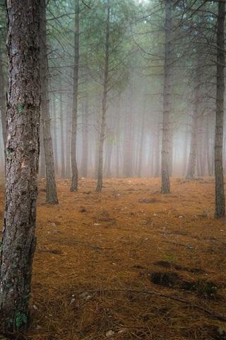 iPhone Wallpaper Autumn, forest, trees, fog, dawn