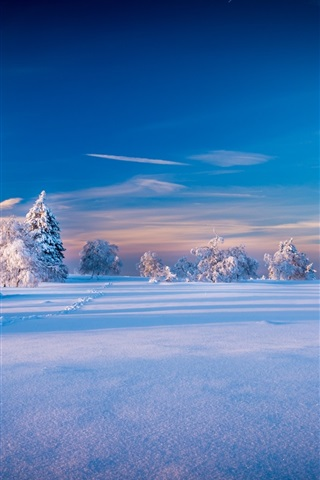 iPhone Wallpaper Beautiful winter landscape, trees, spruce, snow