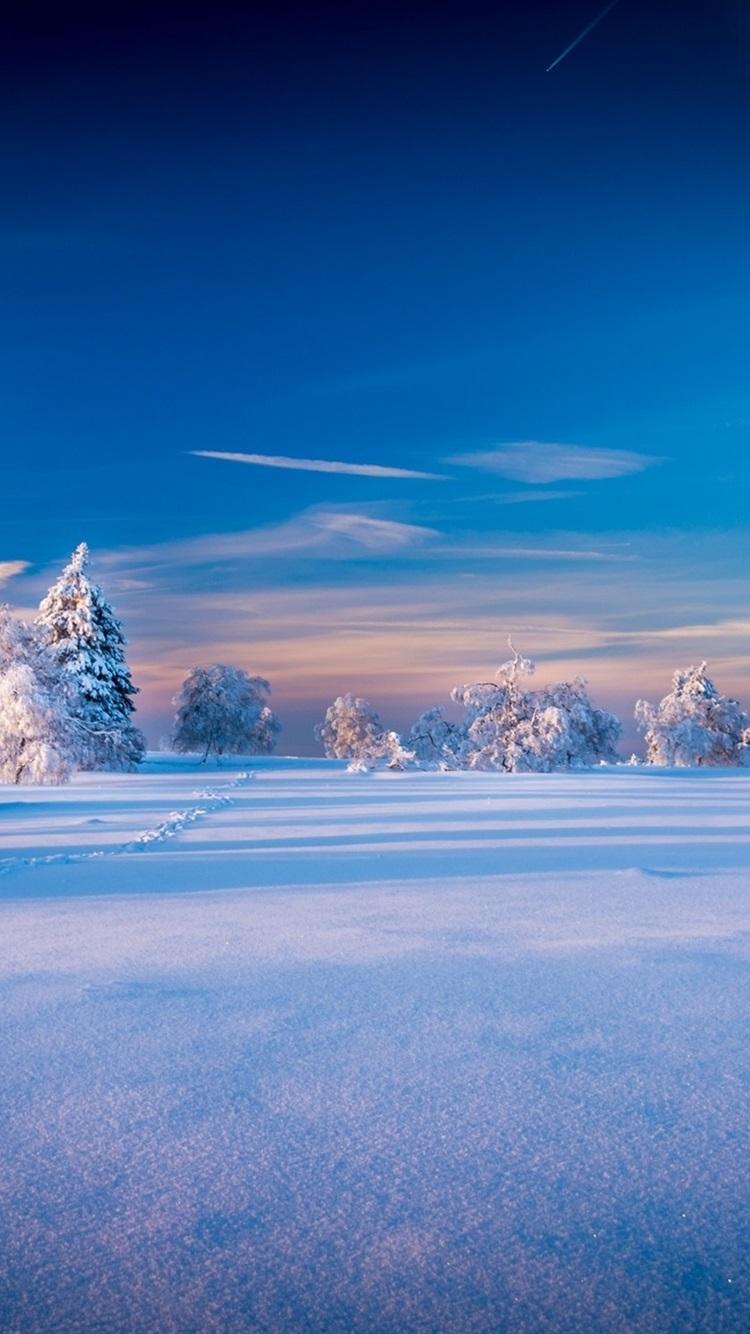 美しい冬の風景 木 スプルース 雪 750x1334 Iphone 8 7 6 6s 壁紙