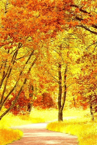 iPhone Wallpaper Birch forest in autumn, yellow leaves