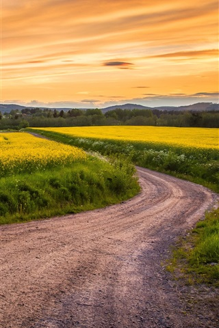 iPhone Wallpaper Canola flowers field, road, grass, sunset