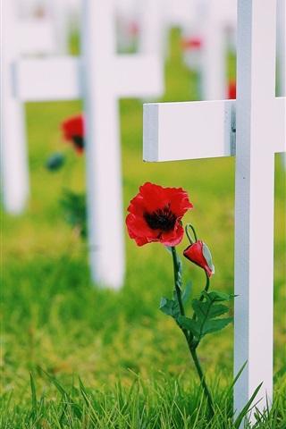 iPhone Wallpaper Crosses, memory, grass