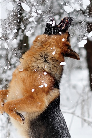 iPhone Wallpaper Dog play snow