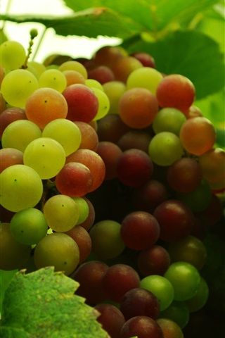 iPhone Wallpaper Fruit, grapes, leaves, fresh