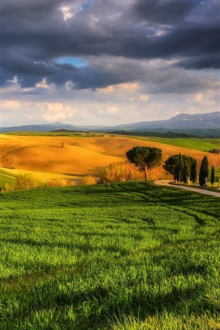 iPhone Wallpaper Italy, Tuscany, beautiful nature, fields, meadows, trees, sunny